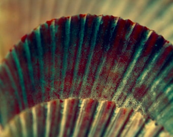 Three Scallop Shells - macro photography - red turquoise teal shells print, beach cottage decor, coastal decor, macro photographic print