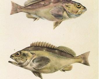 Vintage Fish Print Book Plate Sale, Buy 3, get 1 Free