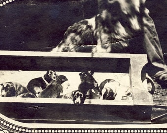 Mother Dog Looks Over Her PUPPIES In an Old BOX Photo Postcard 1911