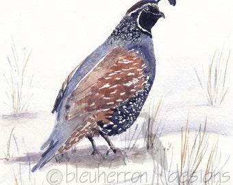 watercolor bird- Quail in Snow - art print