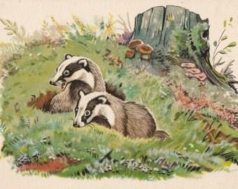 """V. Frolov """"Badgers"""" Postcard -- 1956"""