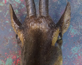 Cast Metal Goat Chamois Head with Real Horns