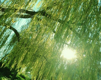 Afternoon in the Park, Weeping Willow, Sun Flare, Nature Detail - 8x12 10x15 12x18 16x24 Fine Art Photograph Green Emerald Aqua Tree