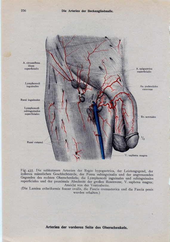 Male Anatomy Diagram Front
