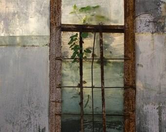 Botanical photography, botanical print, Vegetal Photpgraphy, Garden Photography, Flowers photography