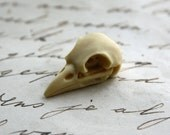 6 Bird Raven Crow Skull Cabs Resin Cabochon Taxidermy Animal Steampunk Gothic Goth Skull Ivory 21x12mm 6 PIECES