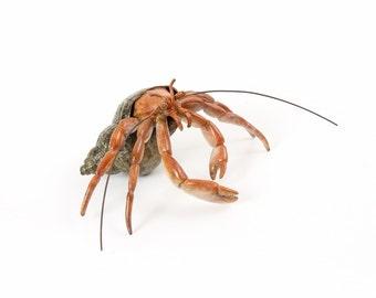 Hermit Crab No.7 Limited Edition Bronze