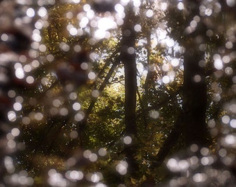 Puddle, In the Forest Print Fine Art Nature Photography, Puddle Print, Reflection, Trees, Woodland Print, Bokeh, Sparkling