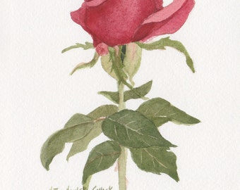 Red Rose 4 5 x 7  Original Watercolor