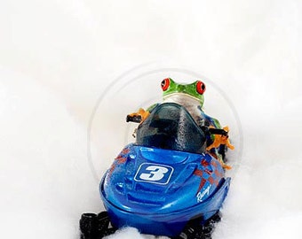 Snowmobile, Frog Photo, Snowmobiling Art Print