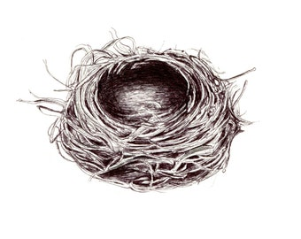 "Bird Nest art print of an original drawing available 5x7"" or 8x10"""