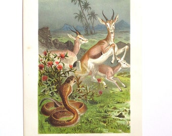 Antique 1883 chromolithograph Brehm's Tierleben animal print Uräus-schlange snake antelopes