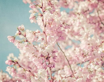 Large Wall Art, Pastel Pink Cherry Flower Blossoms, Fine Art Photography Print, Flower Photography, pink spring flowers, aqua blue sky