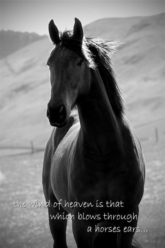 Horse quote inspirational quote horse photo with quote