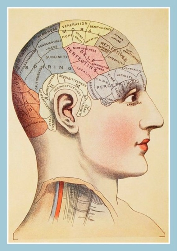 Items Similar To Fridge Magnet Brain Phrenology Diagram