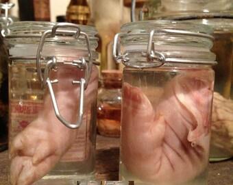 Small Pig Leg in a Jar - Preserved Wet Specimen Taxidermy