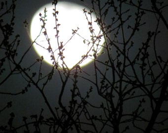 Nature Photography, Moon Photography, Sky, Dark, fPOE, By the Light of the Moon