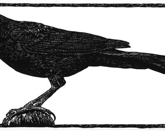 Great-tailed Grackle Linocut