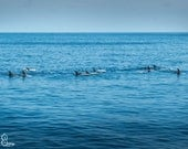 Bottlenose Dolphins*Fine Art Photo Print*Nature photography*Landscape photo*Channel Islands*Canvas print*Home Decor*Blue sky ocean
