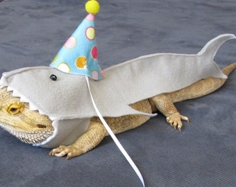 a77a7e55f69 For the well cared for bearded dragons in your jpg 340x270 Birthday hat  costume bearded dragon