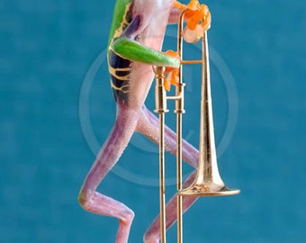 Frog Playing, Trombone, Brass Band, Musical Instrument