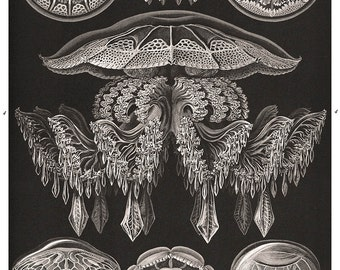Ernst Haeckel Jellyfish Poster, Nautical Art Print, Black and White Art Nouveau Poster, Home Decor, Scientific Illustration, Educational Art
