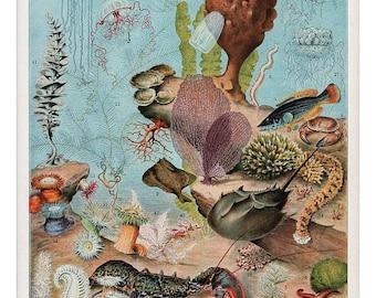 antique french illustration jellyfish coral seashells lobster oceanography digital download