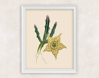 Succulent Plant Botanical Art Print - 8x10 PRINT - Antique Flower Print - Garden Prints - Illustration - Poster - Victorian Art - Item #152