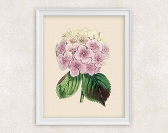 Hydrangea Botanical Art Print - Pink Flower Print - 8x10 PRINT Garden Prints - Illustration - Poster - Victorian Art - Item #162