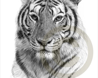 Indian Bengal Tiger pencil drawing print - A4 size - artwork signed by artist Gary Tymon - Ltd Ed 50 prints only - pencil portrait