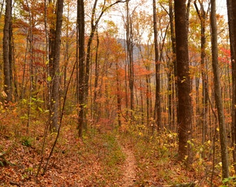 Autumn Trail in South Carolina