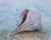 "Lightning Whelk Shell Original Watercolor Painting 10"" x 10"" by Mary Rogers"