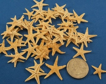 "Craft Shells, Assortment of 25 Slightly Broken Starfish, 7/8"" to 1-1/4"", Great for Kids Crafts, VBS, Sunday School Projects, Classroom Art"