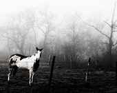 Horse in foggy morning, Texas, Cowboy Culture, Black and White Decor, Animal Photography, Western Wall Art, Rural