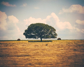 A Texas Landscape - Texan Photography - Lone Tree - Bales of Hay - Nature - Decor
