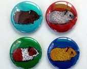 Baby Guinea Pig Magnets (Set of 4)