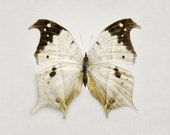 Butterfly Print in Neutral Brown and Beige, Modern Art Print, Spring Garden, Minimalist Nature Photography - Metamorphosis