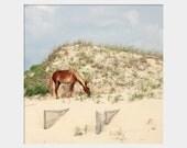 Corolla Wild Horse Photo, Outer Banks Horse Wall Art, Horse on Beach Photograph, Coastal Wall Decor, Beach House Art, Brown Blue Green Art