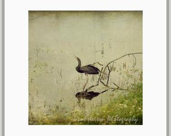 Bird Photography Snake Bird Print Anhinga Photos, Cottage Chic Textured Wall Art,Square Pale Green Black Wall Home Decor, Sqare Nature Print