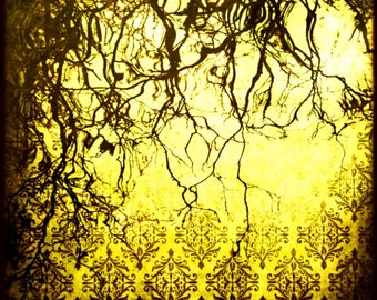CLEARANCE Yellow Wall Art, Abstract Photography, Trees, Nature, Surreal, 5x5 inch Fine Art Print, In This Twilight