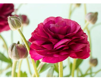 Red Ranunculus  Photo Card,  Mother's Day Card, Flower Greeting Card
