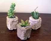 Tiny Hypertufa Ancient Cube Concrete pot, plants not included