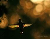 Angel Rainbow wings - bokeh glow hummingbird floating in dark golden light 8x12 giclee photographic print Brave Angels
