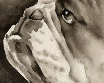 BULLDOG Sepia Art Print Signed by Watercolor Artist DJ Rogers
