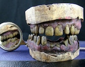 RESERVED! Zombie Dentition Specimens - Peggy's Custom 3-pack