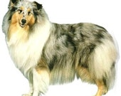 COLLIE (Rough) Blue Merle DOG on 6 inch Fabric Squares for Quilting and Sewing