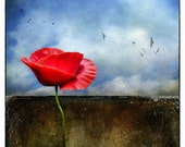 Grounded  - (Decor - Red Poppy - Floral - Botanical - Flower - clouds - Earth - Birds - Nature Photography)