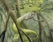 Mangrove Mermaid - 8x10 print