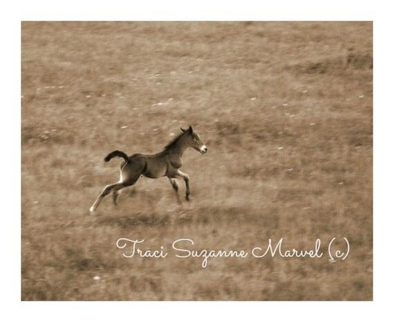 Giclee' Print Foal Horse Photograph