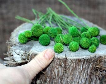 Craspedia-25 MINI short stem-Billy Balls-Billy Buttons-Assorted Wedding Flowers-Bundle of 25